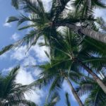 ハワイの現状(3/22時点)新型コロナウイルスのこと。