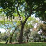 ハワイの植物園 Foster Botanical Garden